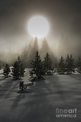 Lake Life - Mystical  by Sandra Bronstein