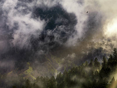 Photograph - Mystical Soaring by Leland D Howard