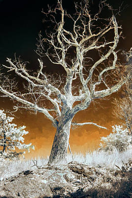 Photograph - Naked Winter Tree In The Blue Ridge Bw by Dan Carmichael