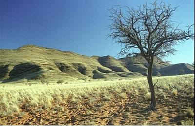 Photograph - Namibia by Susie Rieple