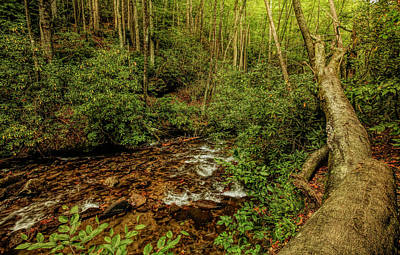 Beverly Brown Fashion - Nantahala Forest 1 by Judy Vincent