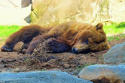 Photograph - Nap Time Brown Bear by Lisa Wooten