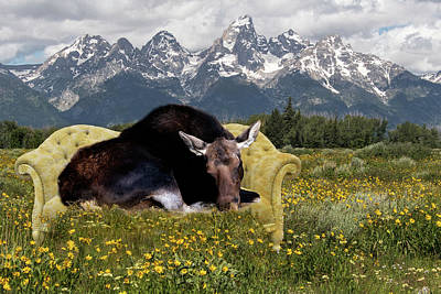 Photograph - Nap Time In The Tetons by Mary Hone
