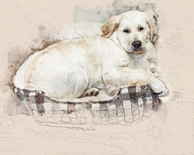 Photograph - Nap Time Sketch by Jennifer Grossnickle
