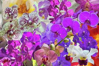 Digital Art - Naples Orchid Collage by Gene Norris