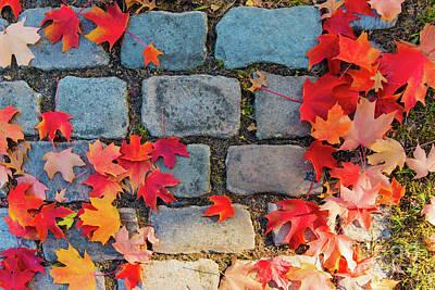 Photograph - Natural Autumn Leaf Background  by Marina Usmanskaya