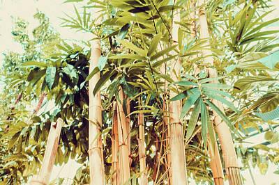 Photograph - Natural Bamboo Trees Retro by Marina Usmanskaya