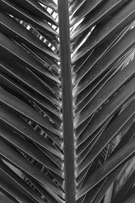 Photograph - Natural Instinct by Isabella Biava