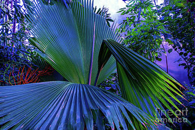 Photograph - Natural Palm Background Toned  by Marina Usmanskaya
