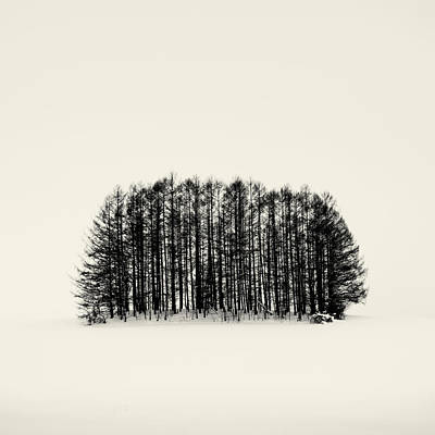 Photograph - Natural Symmetry by Mark Voce Photography