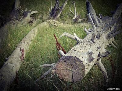 Nature And Tree Original
