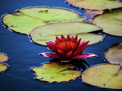 Photograph - Nature Art 7 by Jorg Becker