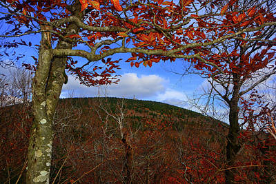 Photograph - Nature Frames Mount Greylock's Tower by Raymond Salani III