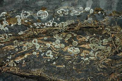 Photograph - Nature In Abstract  by Sarah Morgan