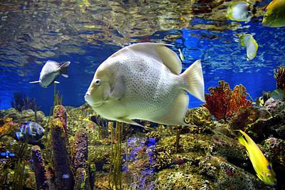 Photograph - Nature Underwater  by Cynthia Guinn