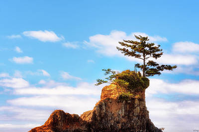 Photograph - Nature's Bonsai  by Dee Browning
