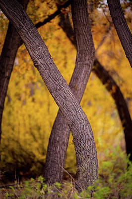 Photograph - Nature's Font by Jeff Phillippi