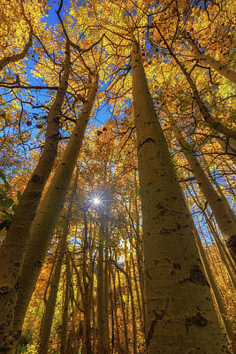 Photograph - Natures Gold by Tassanee Angiolillo