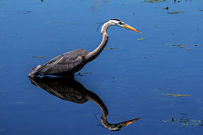 Photograph - Nature's Mirror by Kevin Banker