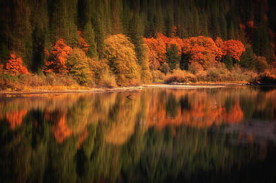 Photograph - Natures Mirror  by Marnie Patchett