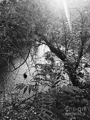 Photograph - Naturescape Black And White by Rachel Hannah