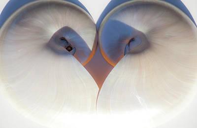 Photograph - Nautilus 0432 by Mark Shoolery