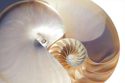 Photograph - Nautilus 0454 by Mark Shoolery