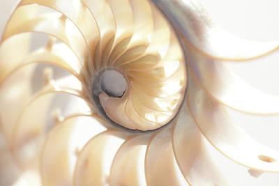 Photograph - Nautilus 0472 by Mark Shoolery
