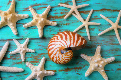 Photograph - Nautilus Shell And White Sea Stars by Garry Gay
