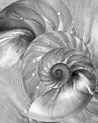Photograph - Nautilus Shells In Mono by Gill Billington