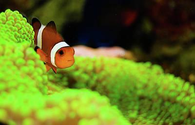 Photograph - Nemo by H20addict