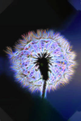 Photograph - Neon Dandelion  by Kay Brewer