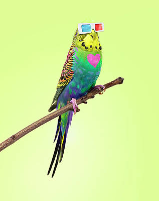 Photograph - Neon Rainbow Coloured Budgie With 3d by Michael Blann
