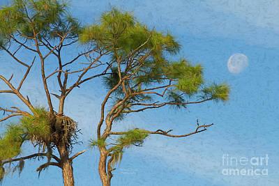 Photograph - Nesting By The Moon by Deborah Benoit