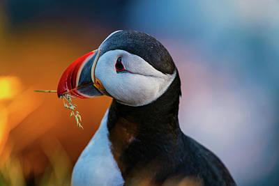 Photograph - Nesting Material by Michael Blanchette