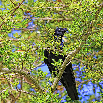 Photograph - Nevermore by HH Photography of Florida