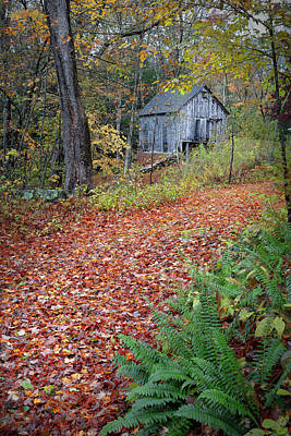 Photograph - New England Autumn Woods by Bill Wakeley