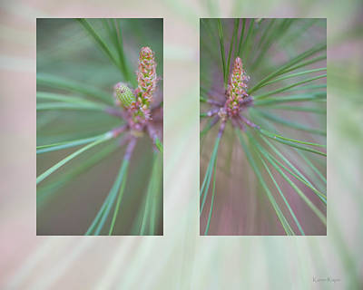 Photograph - New Growth by Philip and Karen Rispin
