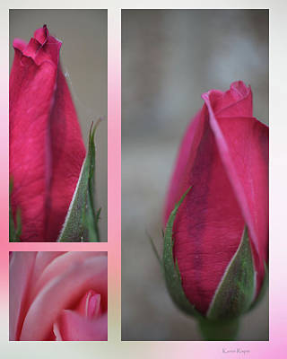 Photograph - New Rose by Philip and Karen Rispin