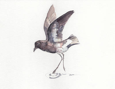 Painting - New Zealand Storm Petrel by Abby McBride