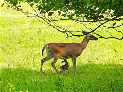 Photograph - Newborn Deer Breakfast by Kathy Ozzard Chism