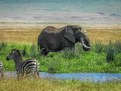 Animals Royalty-Free and Rights-Managed Images - Ngorongoro Crater Floor by Elie Wolf
