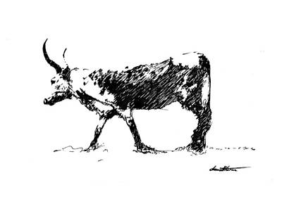 Drawing - Nguni 01 by Dawid Theron