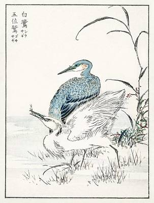Abstract Royalty-Free and Rights-Managed Images - Night Heron and Little Egret illustration from Pictorial Monograph of Birds 1885 by Numata Kashu  by Celestial Images