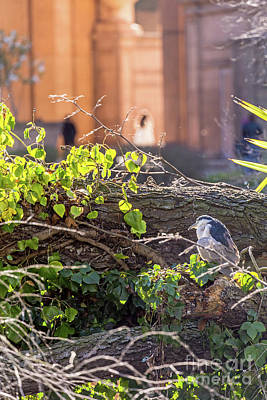 Photograph - Night Heron At The Palace by Kate Brown