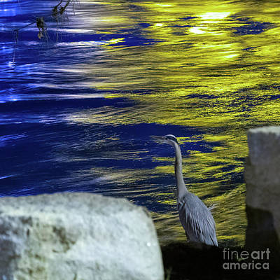 Photograph - Night Stalker by Charles Hite