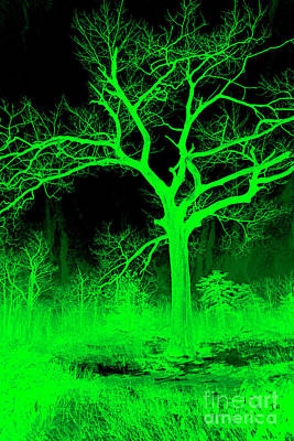Royalty-Free and Rights-Managed Images - Night Vision Mystical Forest by John Stephens