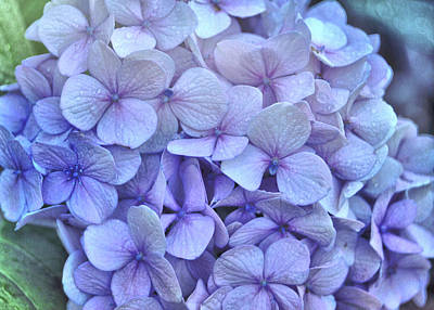 Photograph - Nikko Blue Petals by JAMART Photography