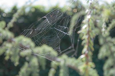 Photograph - Spider's Web by Krysten Brown