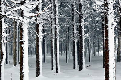 Photograph - Nopporo Forest Park In Winter by Pirka-makiri